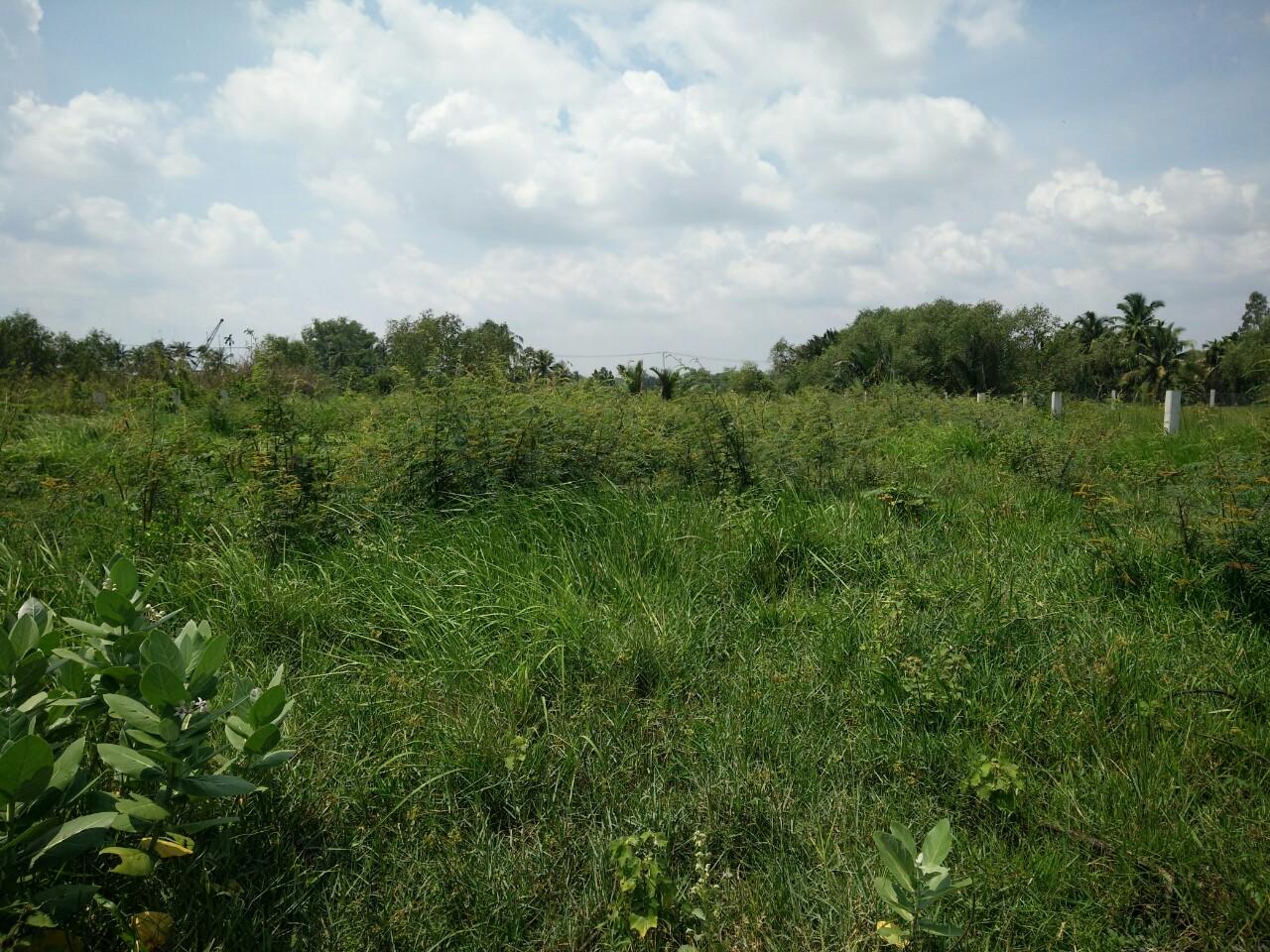 bán đất vườn long phước quận 9